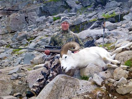 Dall Sheep Guide