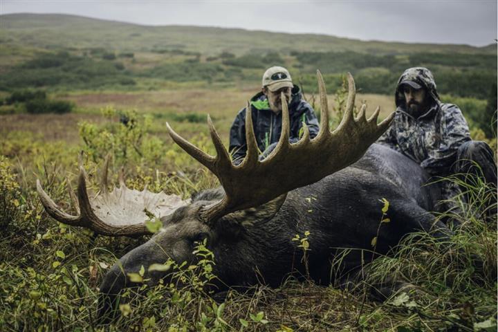 Big Alaskan bull
