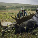 Alaska Yukon Moose