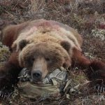 Bear Hunt Word From Guide