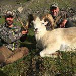 Dall Sheep Hunts