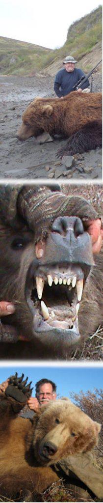 Alaska Brown Bear Hunts