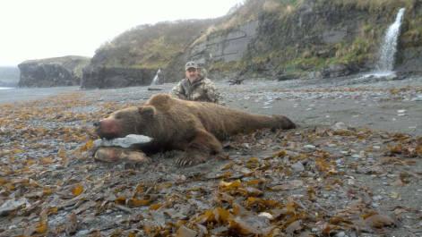 Alaska Brown Bear Info